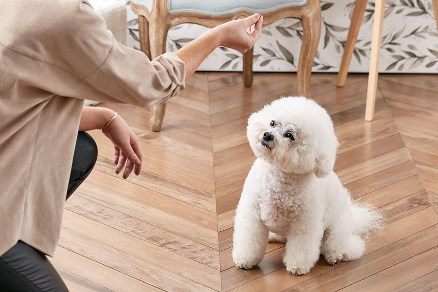 How to teach your puppy to sit