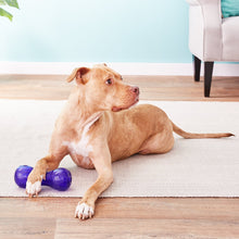 Load image into Gallery viewer, KONG Squeezz Dumbbell Dog Toy, Color Varies,  - Canine's World