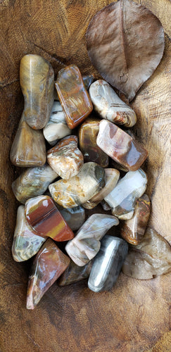 Petrified Wood Tumbles