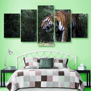 Indian Tiger 5 Piece Canvas Small / No Frame Wall