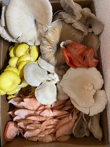 Mixed Locally Grown Mushrooms 1/4 lb