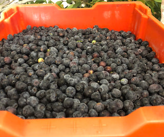 Fresh Blueberries 1 lb