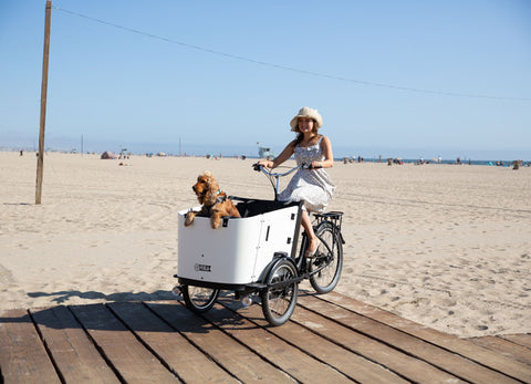 Ferla's Ebike With A Dog Carrier
