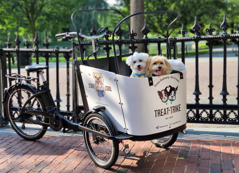 Safe Cycling With Your Dog