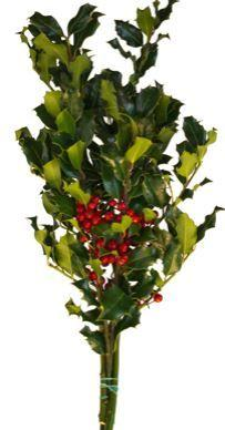 Holly Consumer Bunch Green