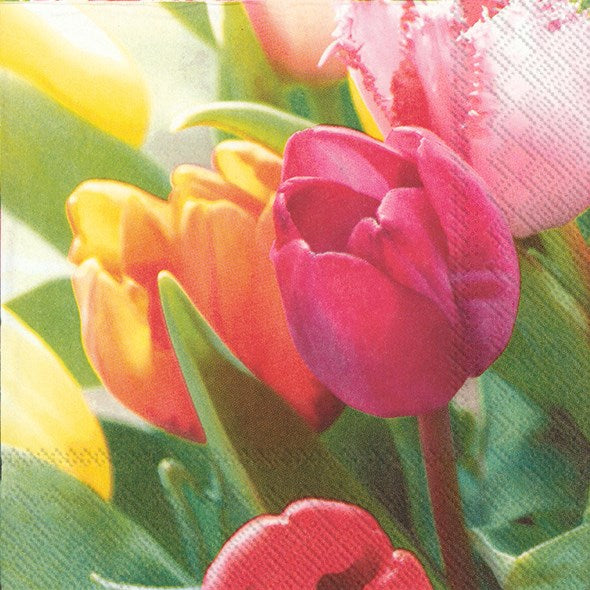 Tulips Melodie - Lunch Napkin