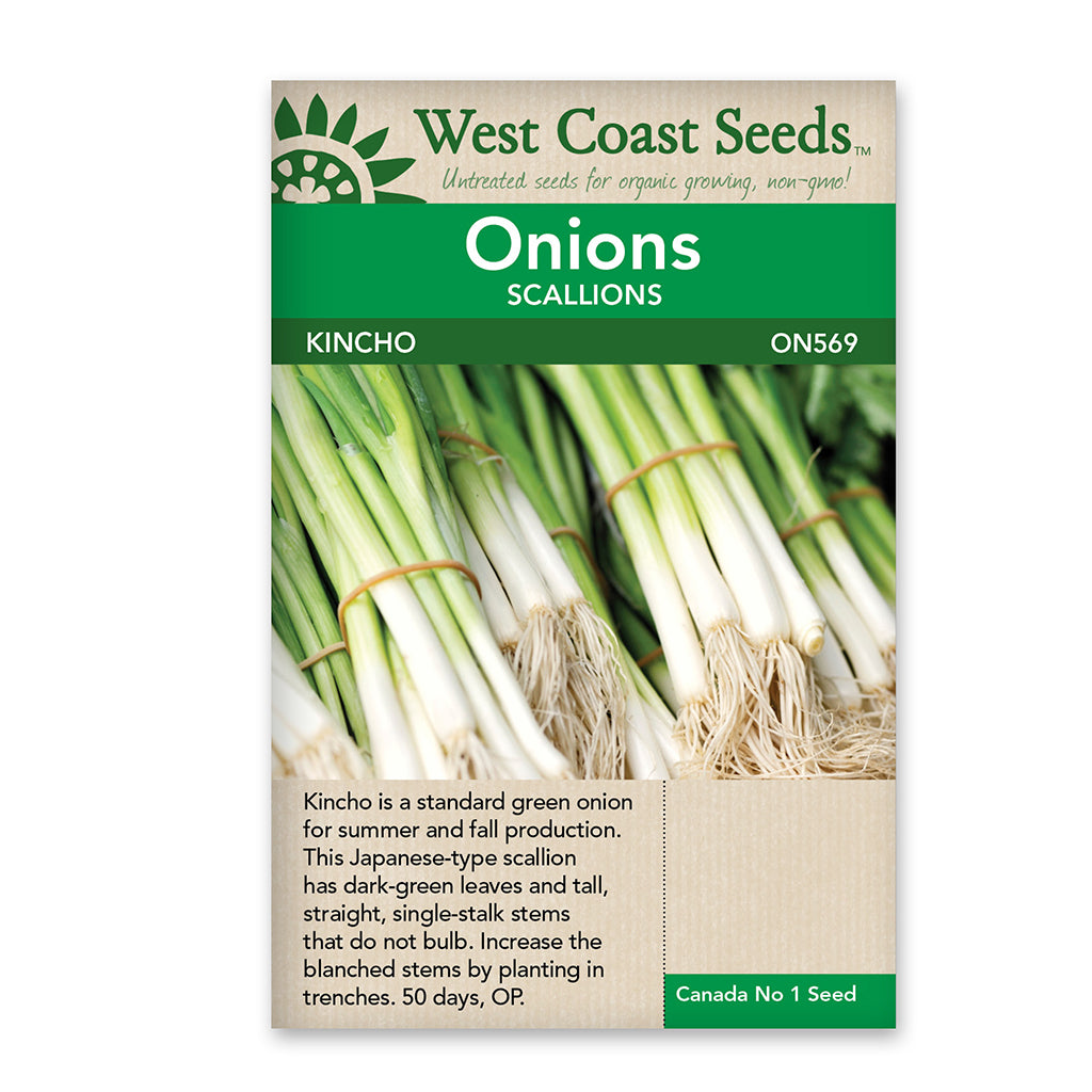Onion Kincho Seeds