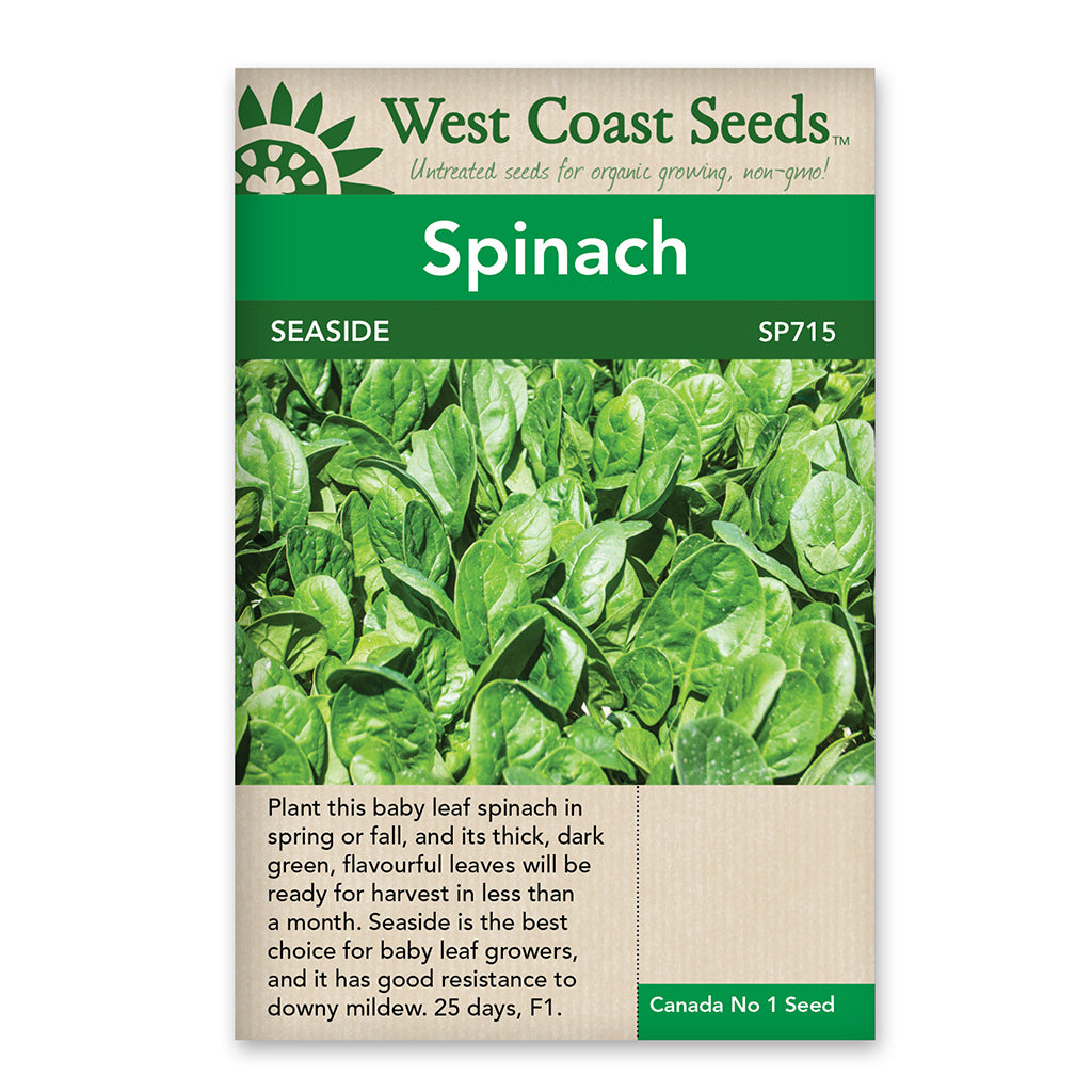 Spinach Seaside Seeds