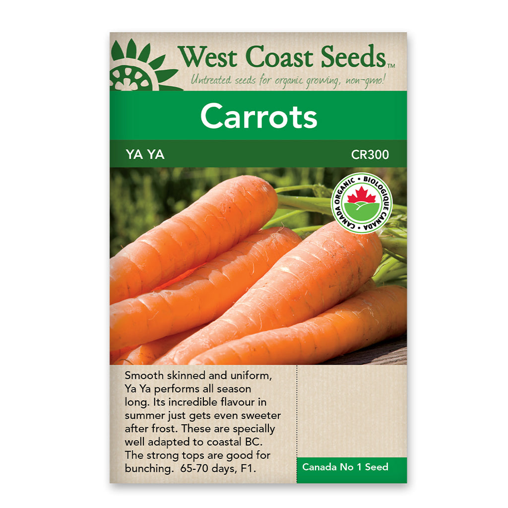 Carrots Ya Ya F1 Coated Certified Organic Seeds