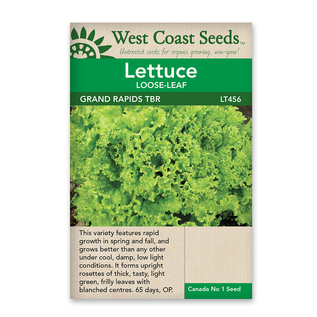 Lettuce Grand Rapids Tbr Seeds