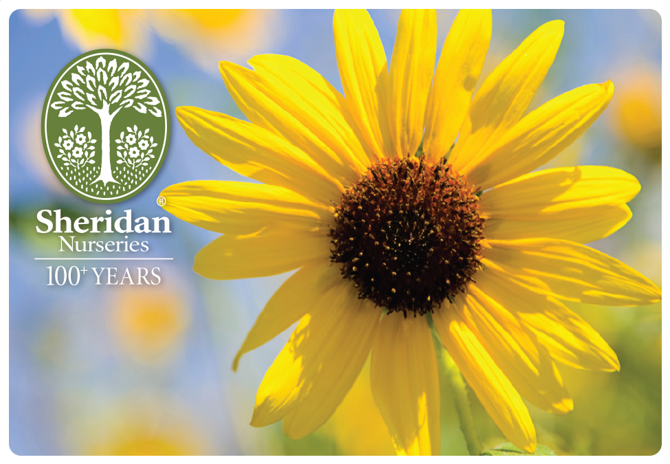 Gift Card - Sunflower - Mailed to You