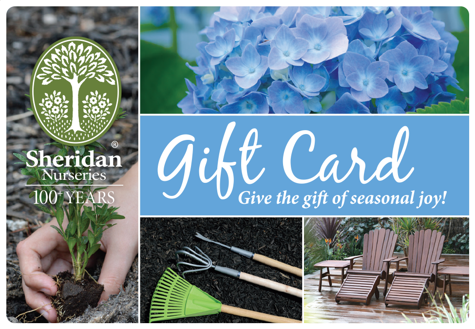 Gift Card - Blue - Mailed to You
