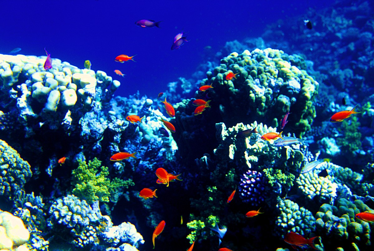 The Blue Hole - The Red Sea - Egypt