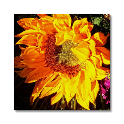 Sunflower Joy Shines Canvas
