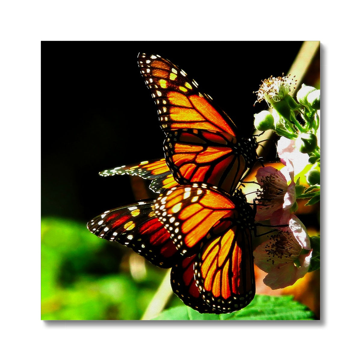 Butterfly Joy - Canvas
