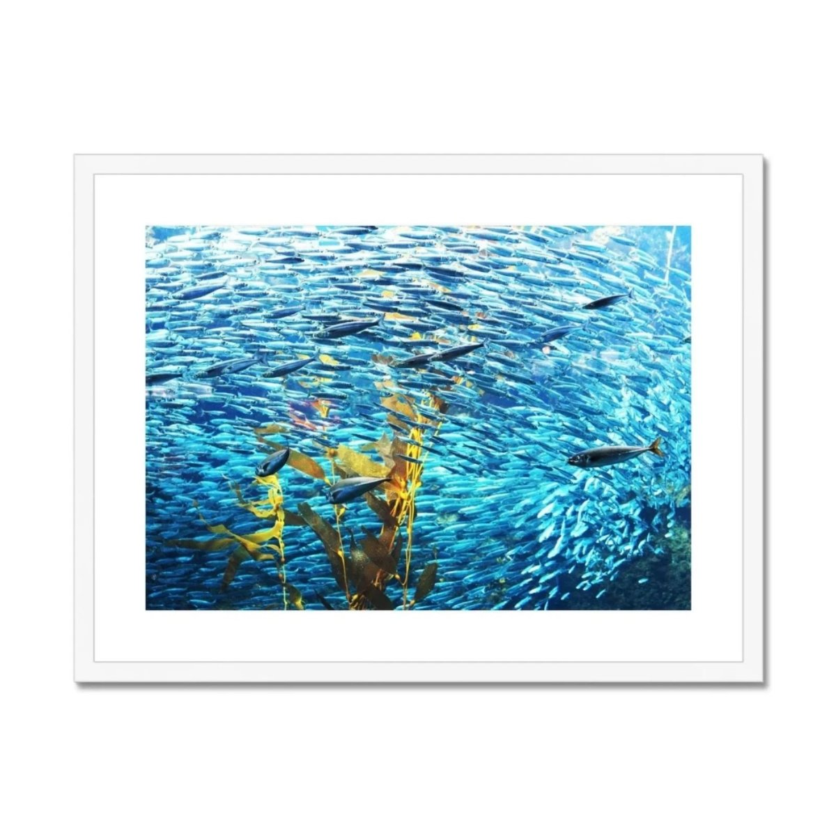 Monterey Fish Framed & Mounted Print