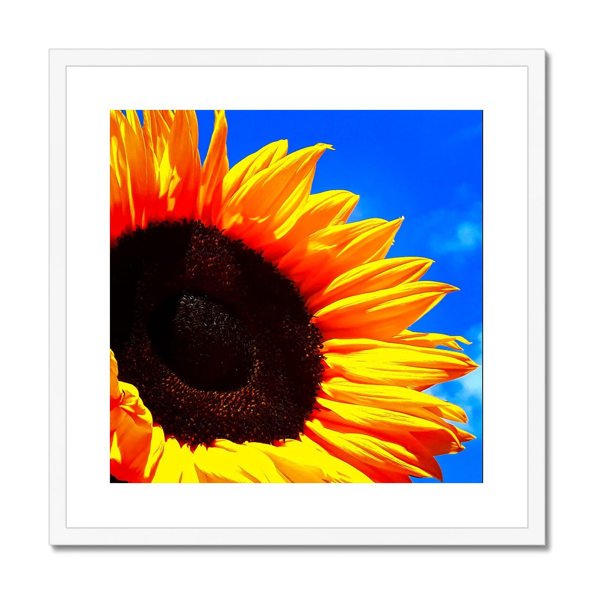 Sunflower Joy Framed & Mounted Print