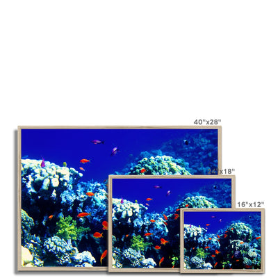 The Blue Hole - The Red Sea - Egypt Framed Print