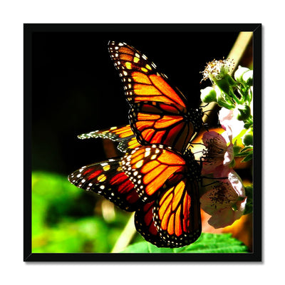 Butterfly Joy - Framed Print