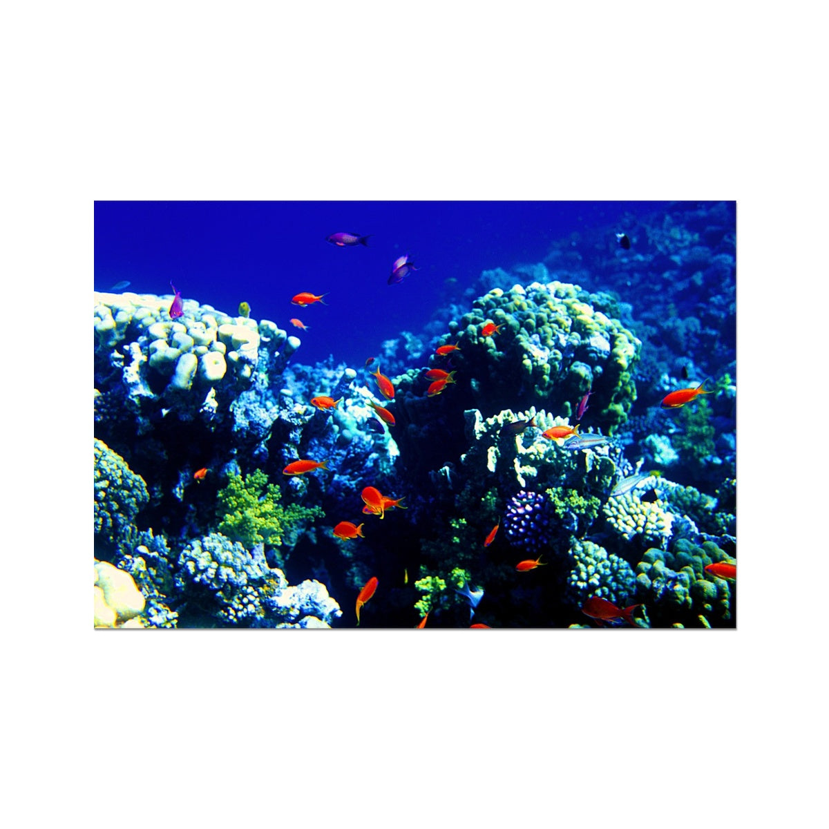 The Blue Hole - The Red Sea - Egypt Photo Art Print