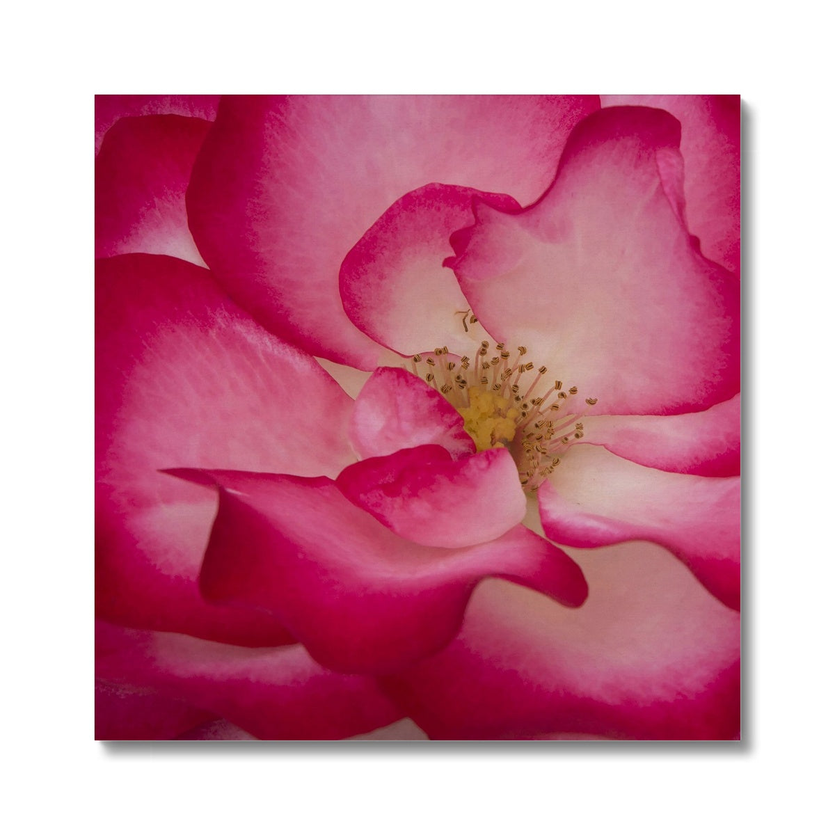 Rose Bliss Canvas