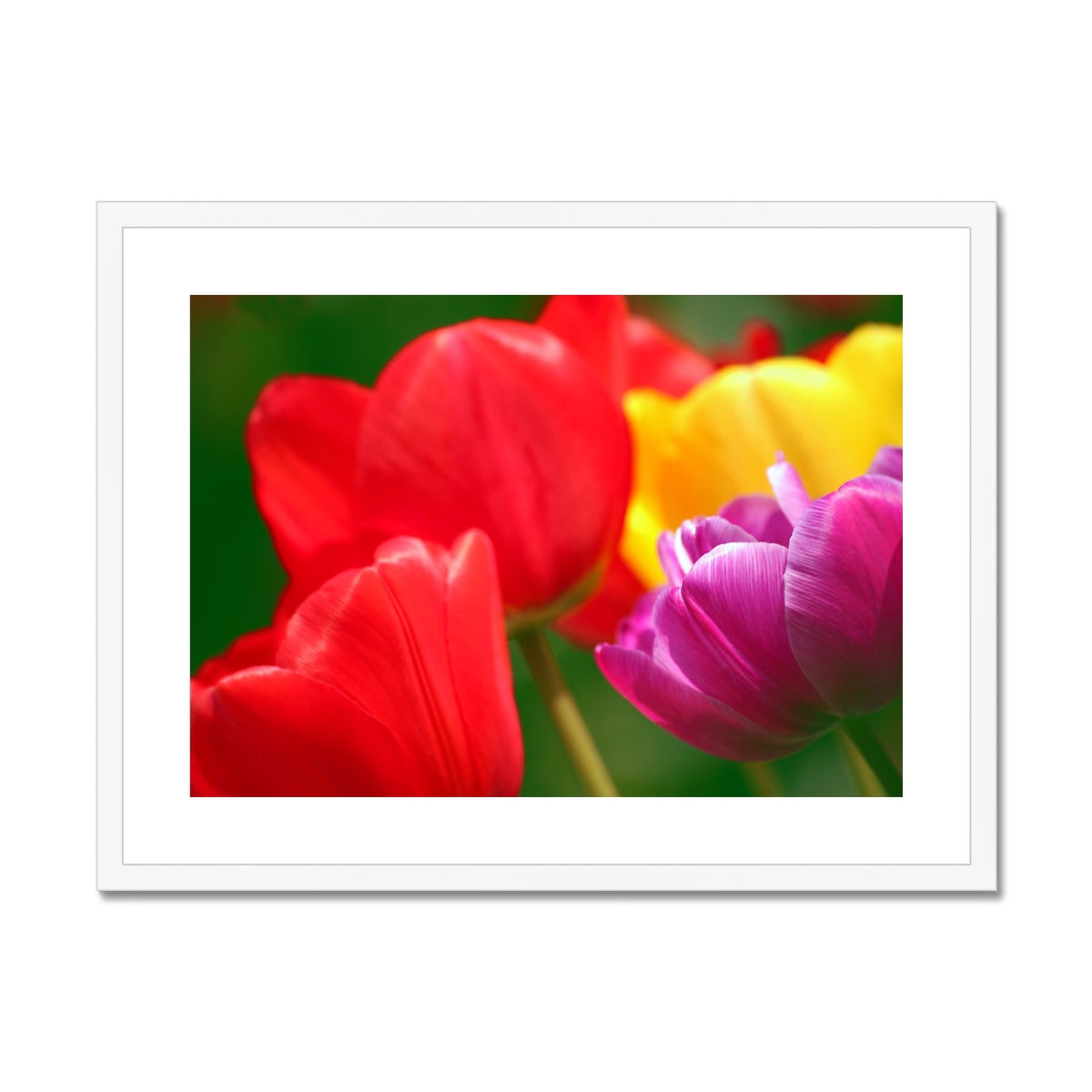 Joyous Tulips Framed & Mounted Print