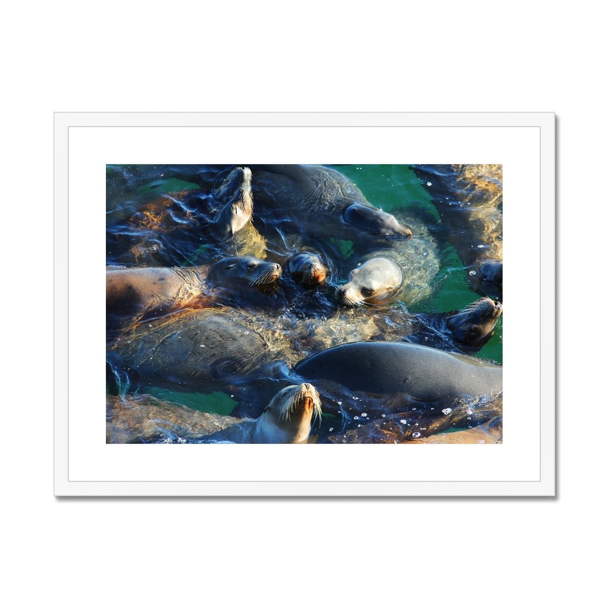 Seal Snuggles - California Framed & Mounted Print