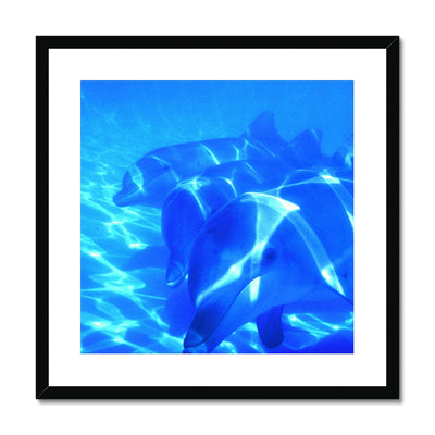 Dolphin Love Framed & Mounted Print | Feel Good Images