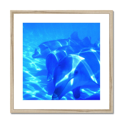 Dolphin Love Framed & Mounted Print