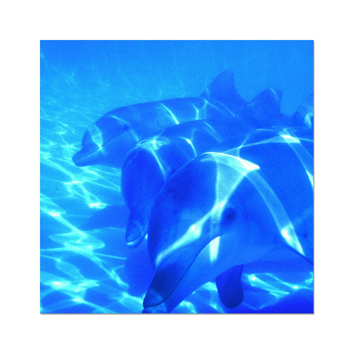 Dolphin Love - Photo Art Print
