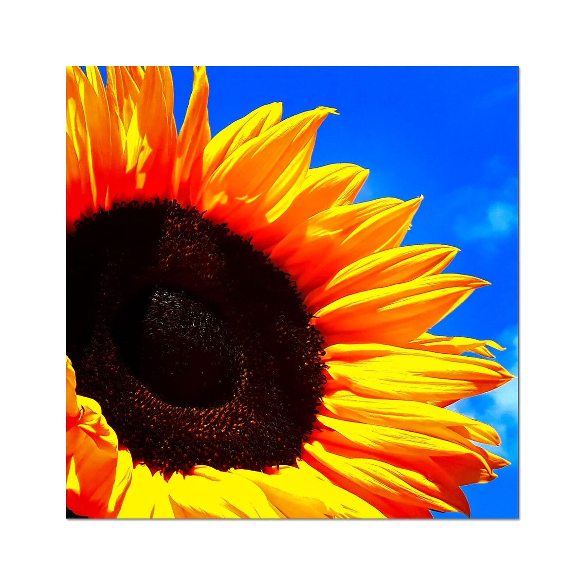 Sunflower Joy Photo Art Print