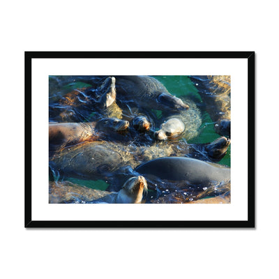 Seal Snuggles - California Framed & Mounted Print | Feel Good Images