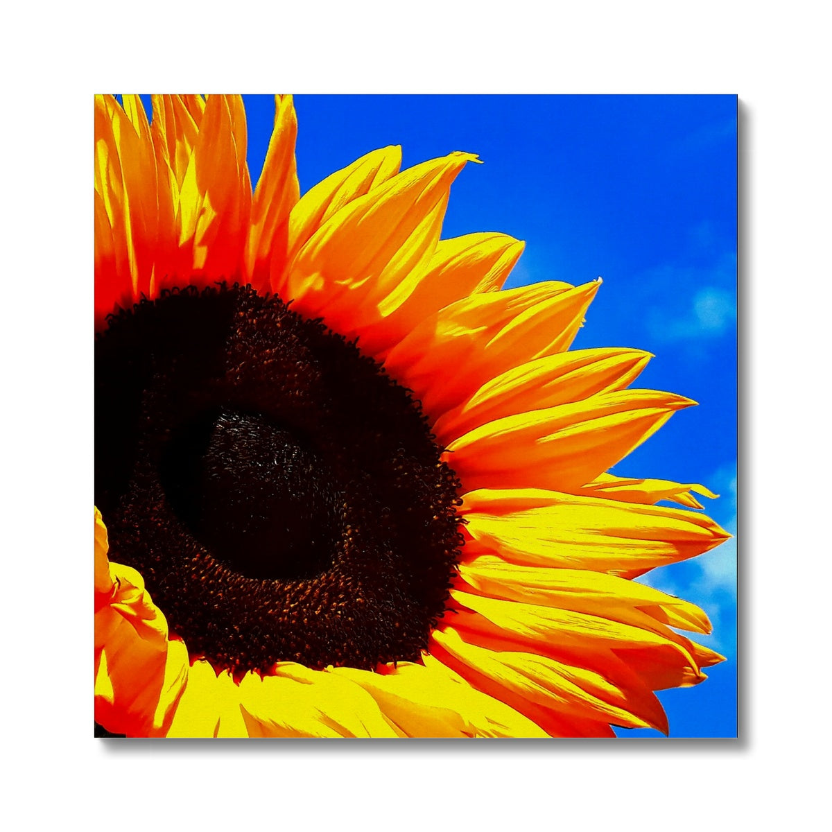 Sunflower Joy Canvas