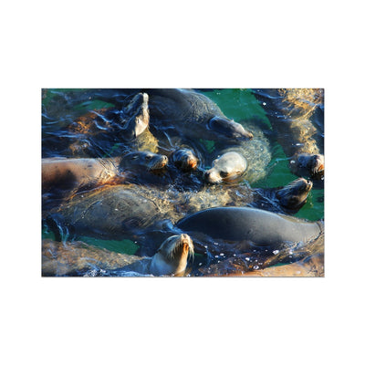 Seal Snuggles - California Photo Art Print