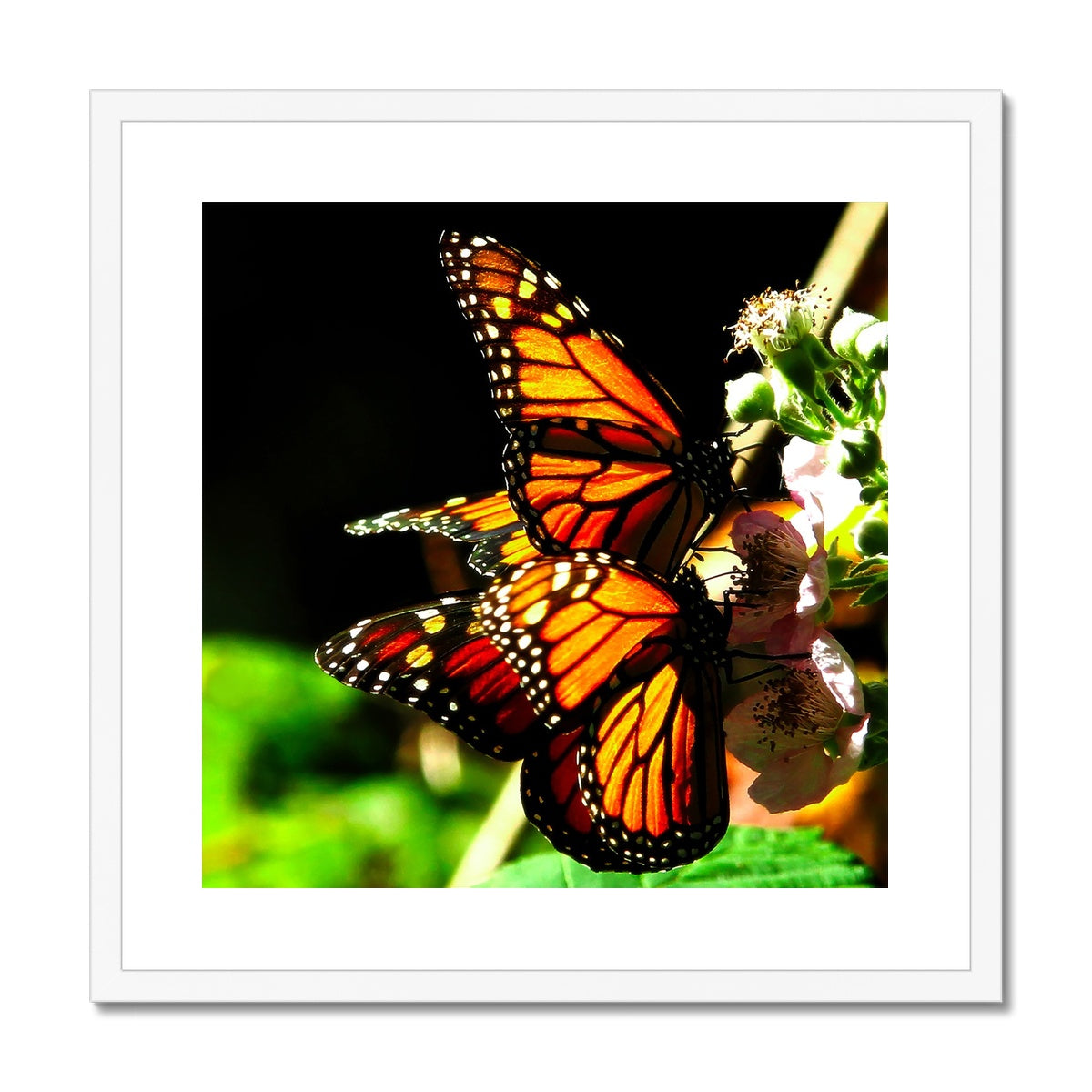 Butterfly Joy - Framed Mounted Print