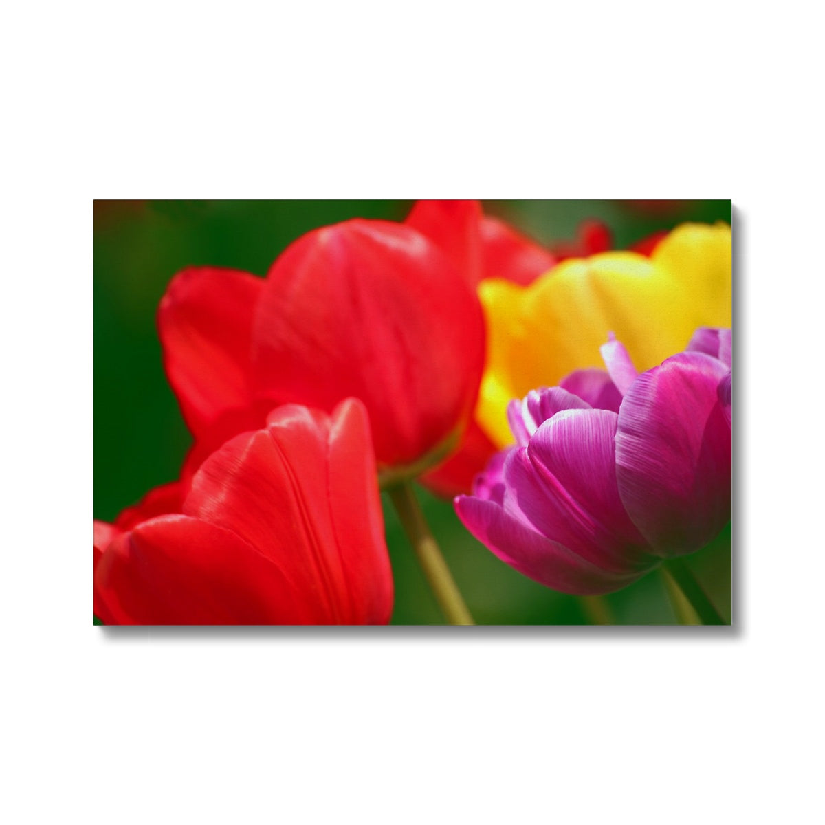Joyous Tulips Canvas