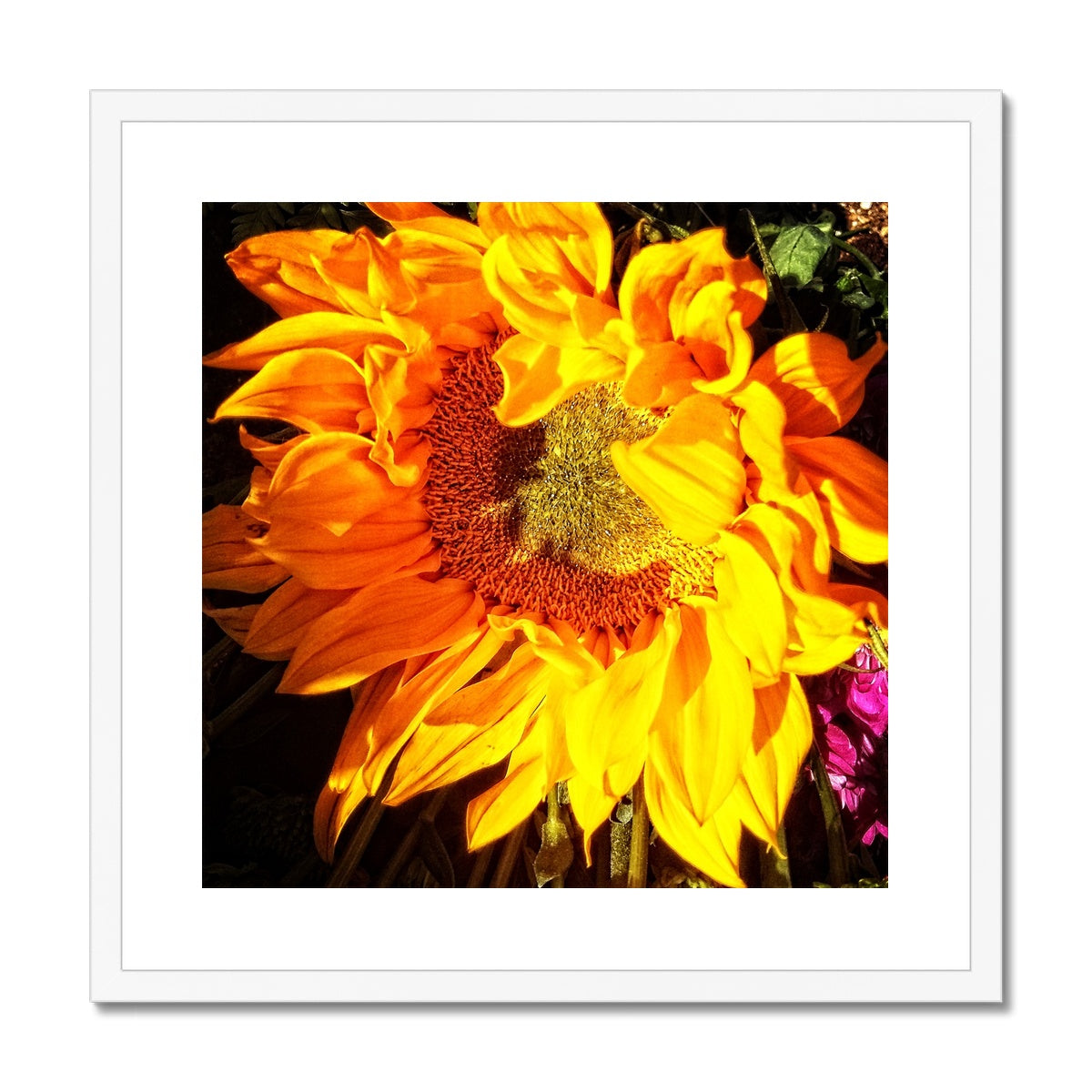 Sunflower Joy Shines Framed & Mounted Print