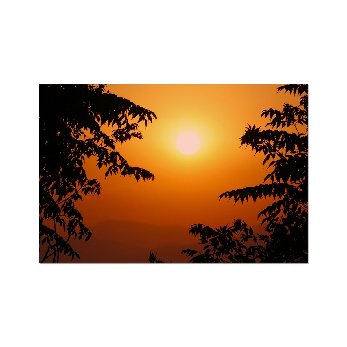 Golden Sun Glow  Photo Art Print