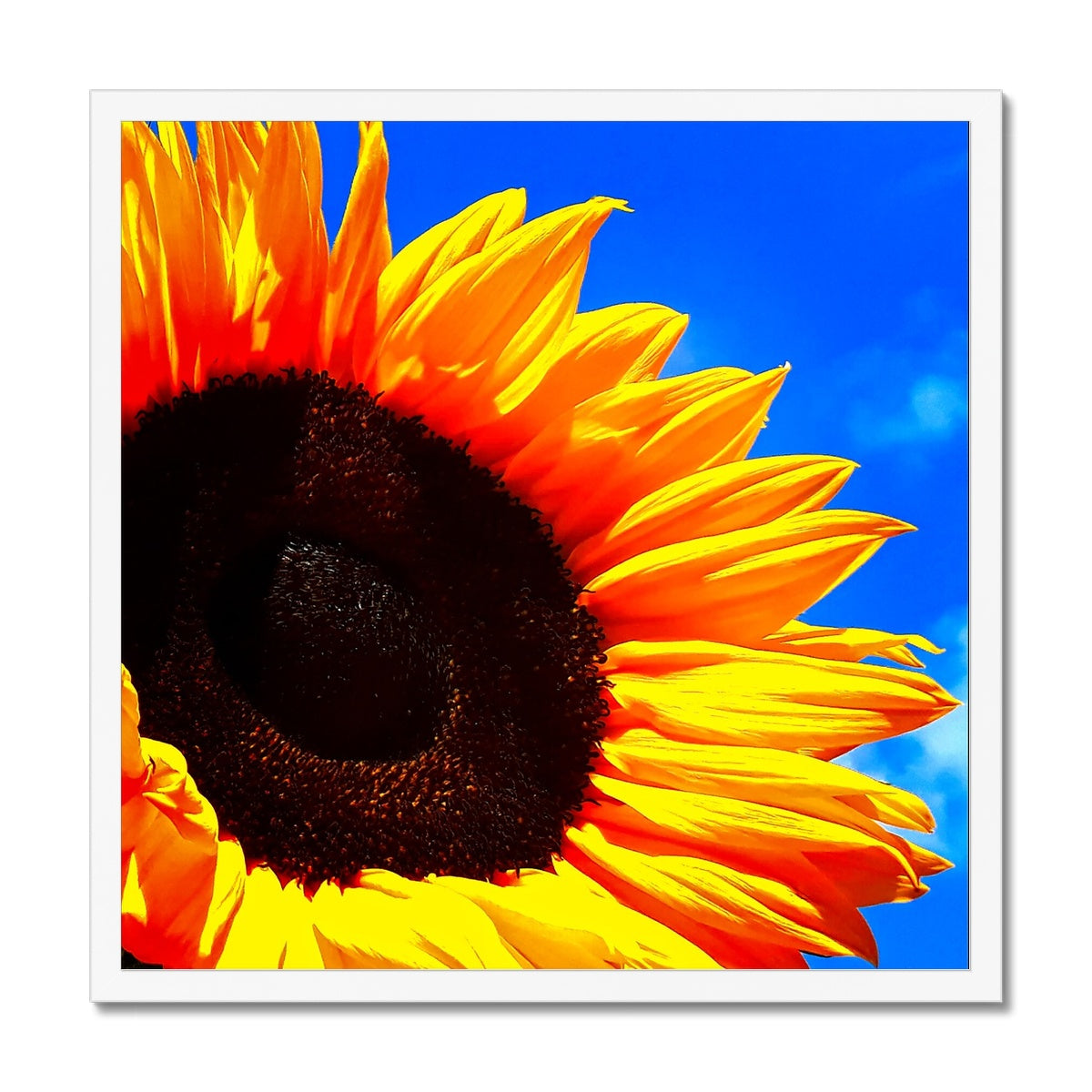 Sunflower Joy - Framed Print