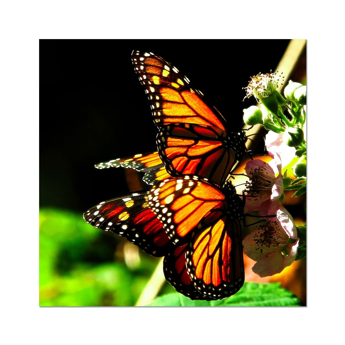Butterfly Joy - Square - Photo Art Print