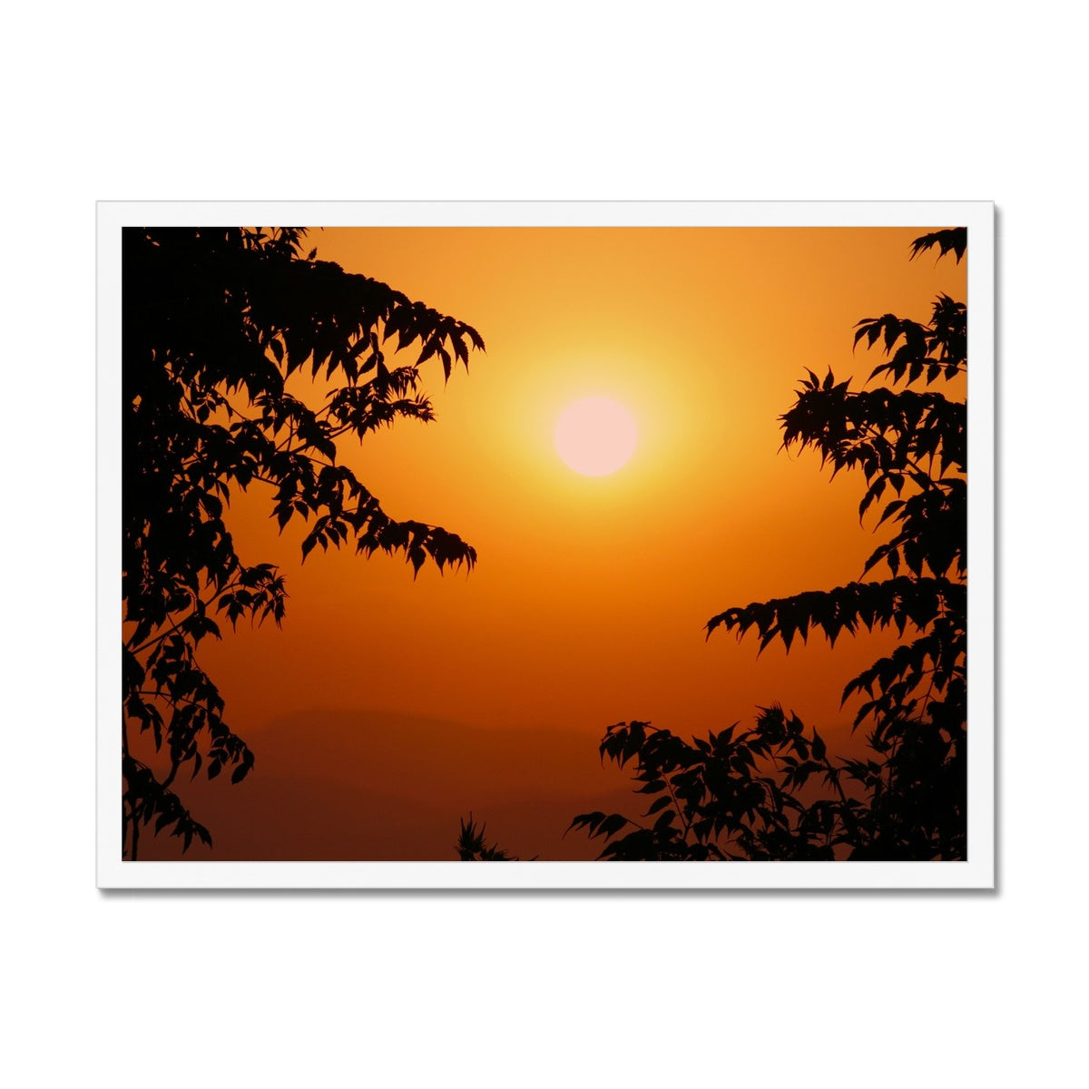 Golden Sun Glow  Framed Print