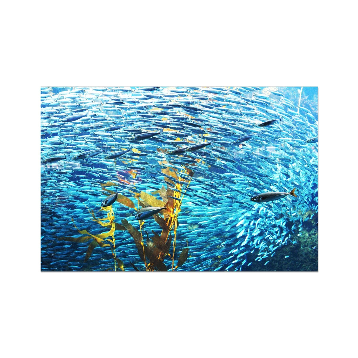 Monterey Fish Photo Art Print