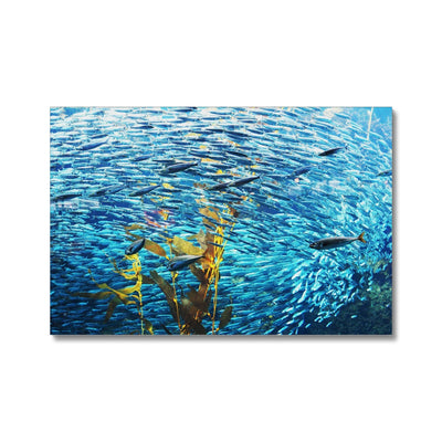Monterey Fish - Canvas | Feel Good Images