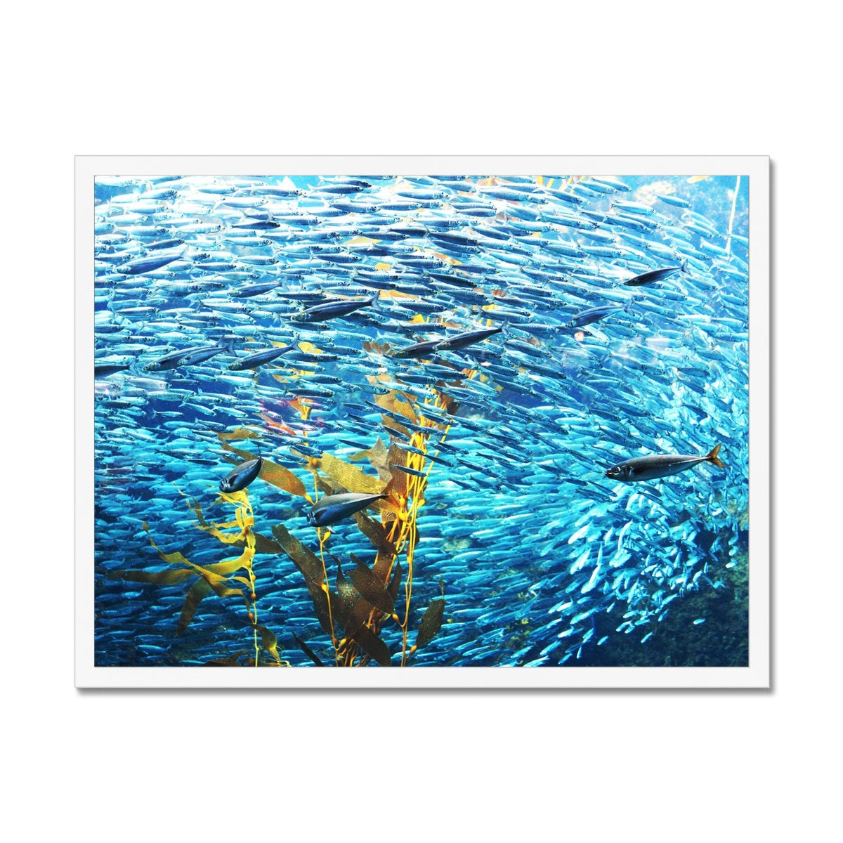 Monterey Fish Framed Print