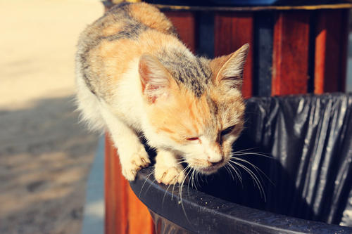 Cats Are Cleanly - This Can Help Stop Litter Box Problems