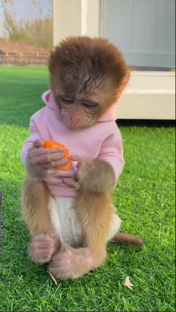 My little monkey likes to eat carrots