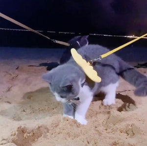 What is my cute cat looking for on the beach?
