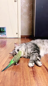 My cat plays with the parrot