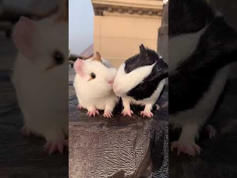 What happens when two hamsters eat in the end?