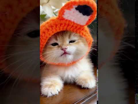 Very cute kitten